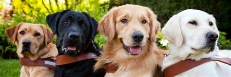 how to a guide for the blind guide dogs for the blind linkedin