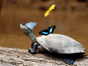 colorful turtles colors of nature hd butterfly wallpapers hd wallpapers