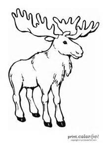moose coloring page print color fun