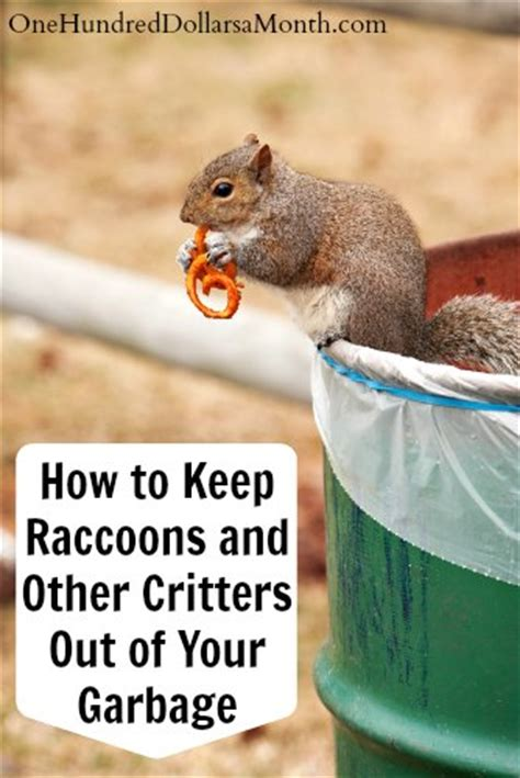 How To Keep Raccoons Out Of Your Garden by How To Keep Raccoons And Other Critters Out Of Your Garbage