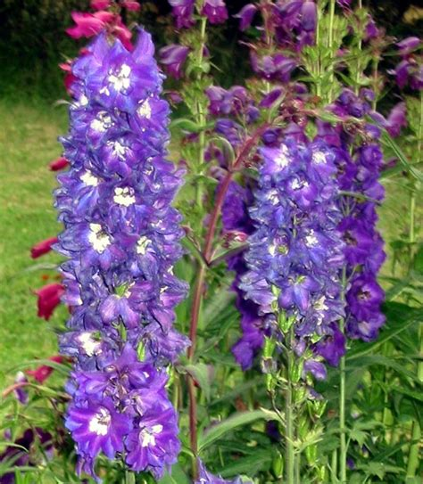 perennial foliage plants purple flower perennial plants pictures to pin on