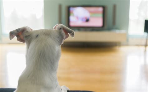 do dogs tv is it ok to let your tv if they like it