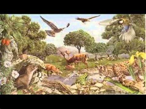 imagenes de animales terrestres ecosistema terrestre youtube