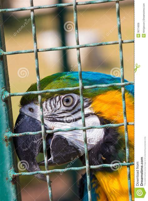 pappagallo in gabbia pappagallo dell ara in gabbia per uccelli immagine stock
