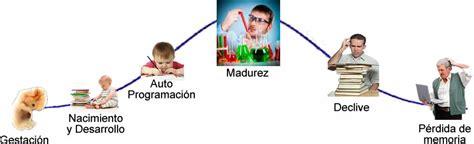 imageens del cilco de vida dels er humano para colorear imagenes ciclo de vida del ser humano imagui