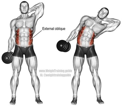 dumbbell side bend  isolation exercise target muscles