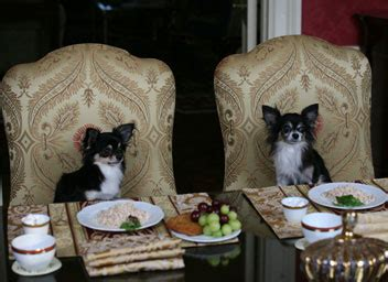 Dogs At Dinner Table by Fido Friendly S Best Of Fido Friendly