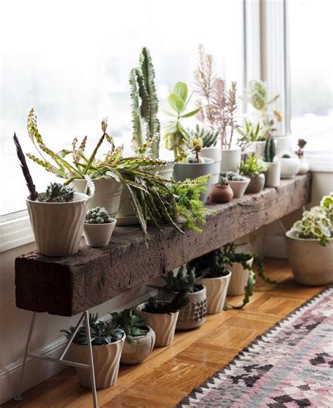 plant benches stands 1000 images about urban jungle bloggers on pinterest