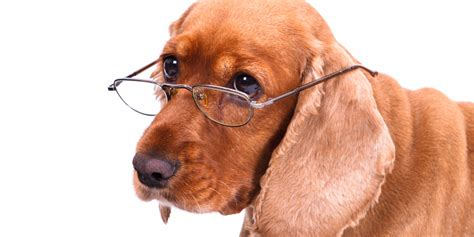 how dogs how is your how veterinarians estimate age