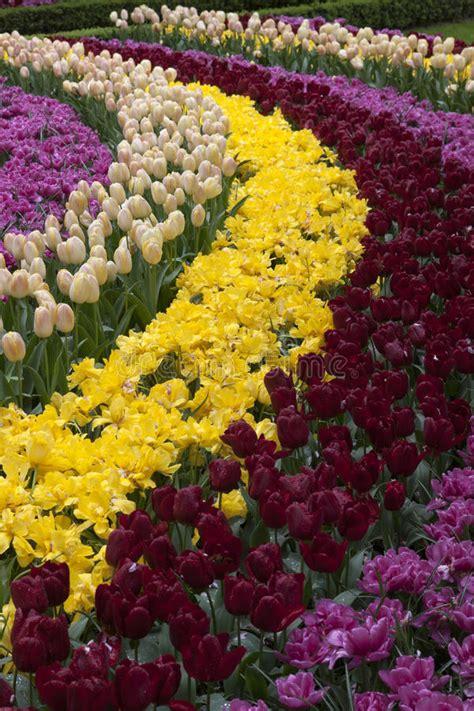 giardini olandesi giardini olandesi fotografia editoriale immagine di