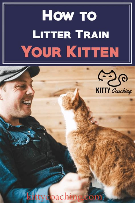 how to litter your how to litter your kitten 2018