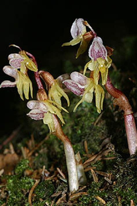 pflanze mit großen blättern 19 07 2003 h 195 188 fingen einzelbl 195 188 te