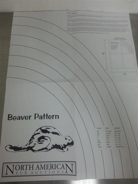 beaver template beaver boards and patterns from nafa trapping only