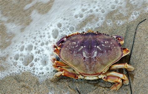 All The News Thats Fit To Eat November 7 2007 by All The News That S Fit To Eat Toxic Crabs Sugar Vs