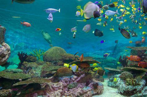 tout plein de couleurs dans l aquarium boulette sevya en cor 233 e