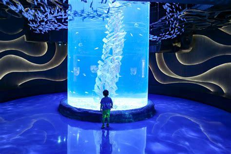 baby shark di neo soho visiting jakarta aquarium in neo soho mall