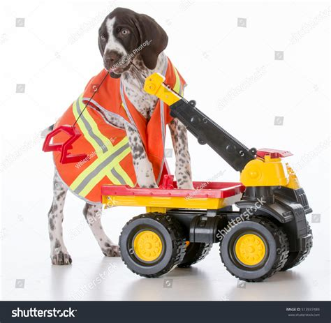 do dogs a concept of time concept of working stock photo 513937489