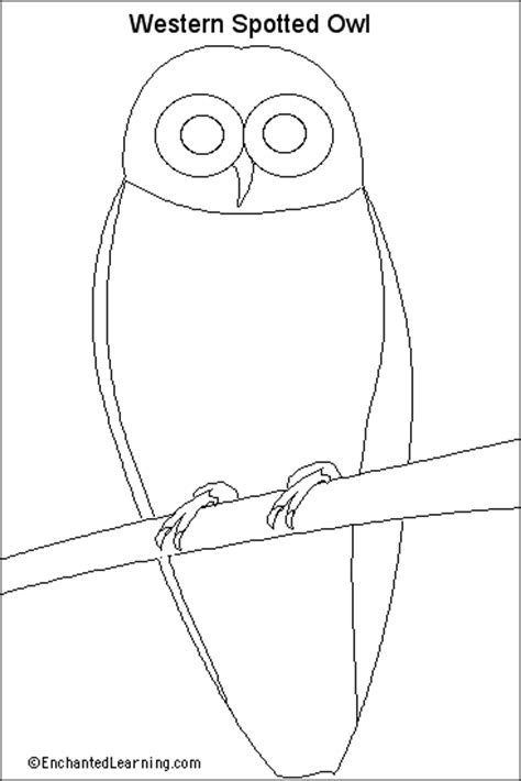 spotted owl coloring page western spotted owl printout unlabeled picture