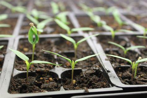 How To Save Seeds From The Vegetable Garden The Basics When To Plant Seeds For Vegetable Garden