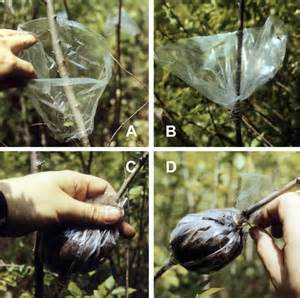 how to propagate plants by layering plant propagation