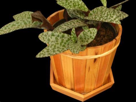 Pot Anggrek Kayu Ulin rumah bunga rizal