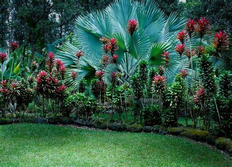 Tropical Edible Plants - gardens tropical gardens and design on pinterest