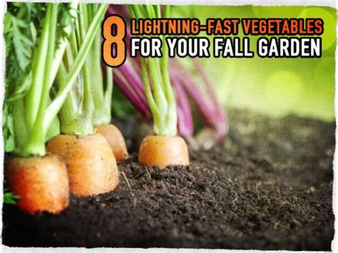 Best Fall Garden Vegetables 8 Lightning Fast Vegetables For Your Fall Garden Survival