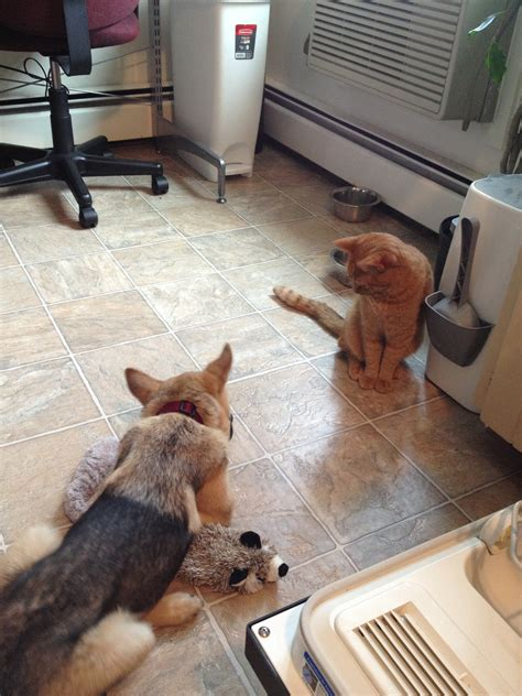 how to dogs and cats to get along how to help your and cat get along hungry and fit