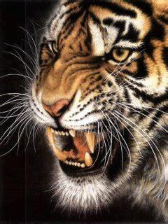 animated tiger screensavers bing images filhotes