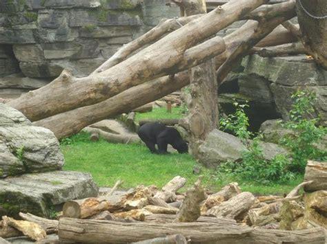 zoologischer garten rabatt gutscheine k 246 lner zoo