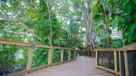 Sarasota Botanical Gardens Selby Botanical Gardens Informaci 243 N De Selby Botanical Gardens En Sarasota Estados