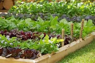Ideas For School Gardens Resources Rhs Caign For School Gardening