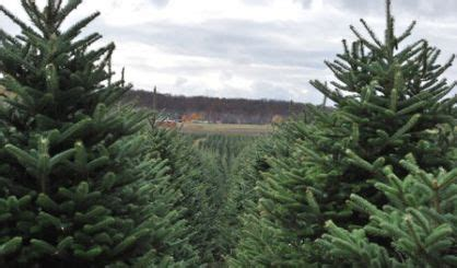 christmas tree association recommends recycling your tree