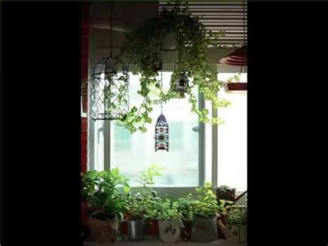 Best House Plants For Window Indoor Hanging Plants Window Indoor House Or Office