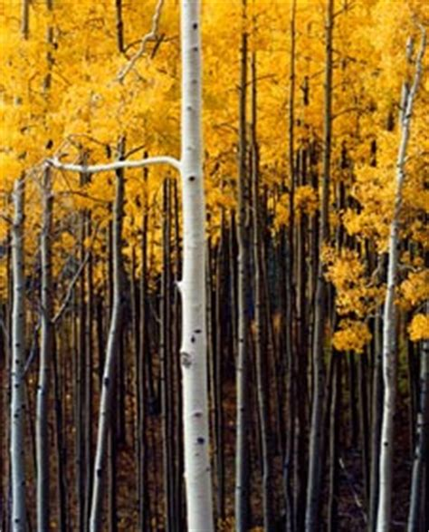 """philip hyde in """"ansel adams: before and after"""" at the"""