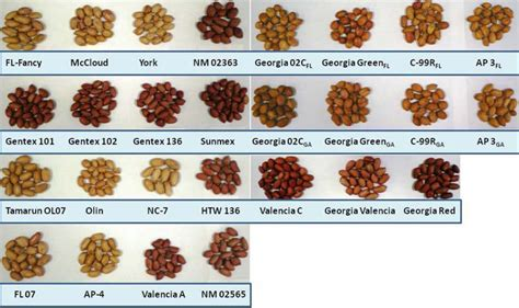 ijms free full text peanut skin color a biomarker for