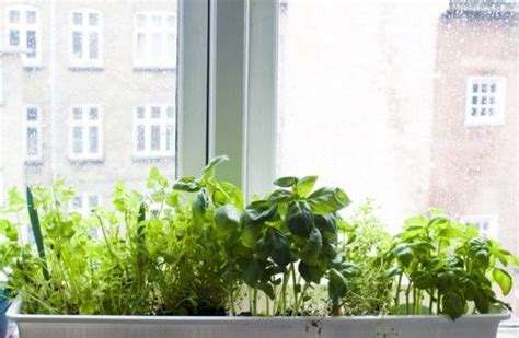 Window Sill Herbs Designs 25 Best Images About Window Sill Garden On Pinterest