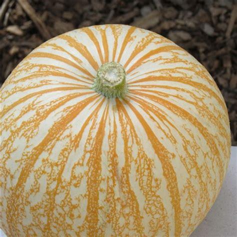 striped pumpkin: gone2k9z: galleries: digital photography