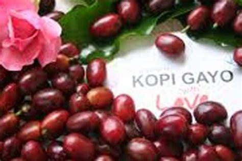 Kopi Arabika Gayo Mountain Kp11 satu harapan penggunaan merek gayo mountain coffee dibatalkan ohim