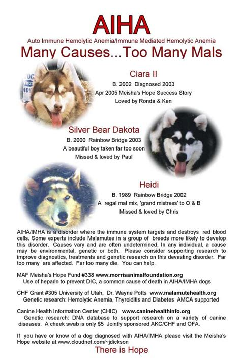 hemolytic anemia in dogs sheryl s alaskan malamutes aiha