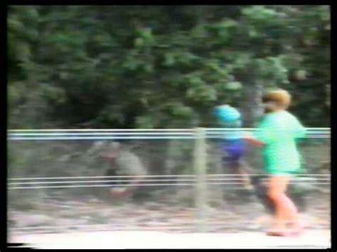big bird attacks person cassowary not a pretty sight
