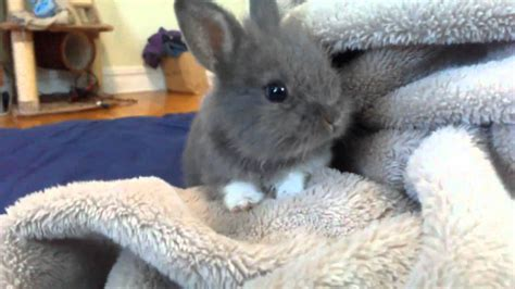 Super Cute Baby Bunnies   www.pixshark.com   Images