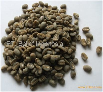 Kopi Arabika Gayo Mountain Kp7 1 gayo mountain arabica products indonesia gayo mountain arabica supplier
