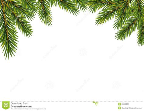 christmas fir tree branches stock vector image 35565622