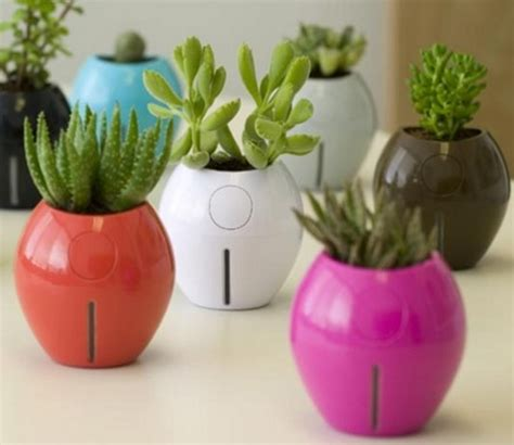 membuat tanaman hias mini indoor  outdoor