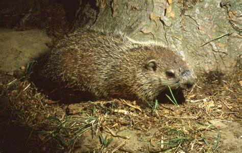 groundhog day world peace merry groundhog day