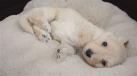 puppy waking up a puppy waking up in the most adorable way it s the cutest petsfans