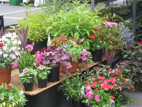 Garden Flowers For Sale Petals For Pets Naperville Magazine