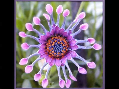 imagenes raras y bonitas flores ex 243 ticas raras youtube