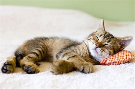 gatti in casa la casa a misura di gatto quattro ze